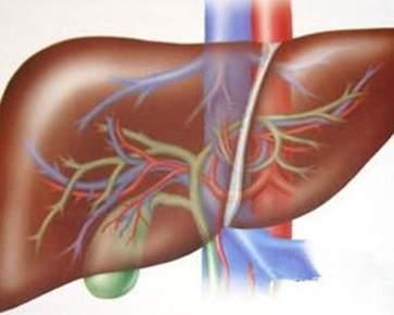 肝火旺吃什么 降肝火的食疗方