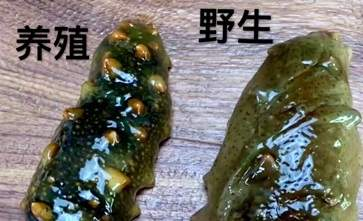 海参怎么分辨野生和养殖 海参储存方法