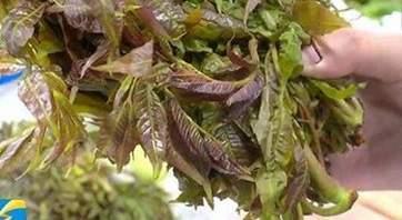 香椿怎么吃最补 香椿的吃法与做法