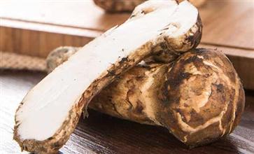 松茸和姬松茸的区别 松茸和姬松茸是一样的吗