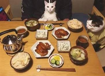 一日三餐会引发哪些危害为什么人们会感觉到饥饿