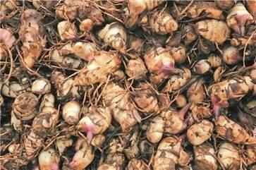蕉芋粉是什么东西做的 蕉芋粉的功效与作用