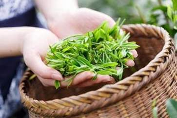 茶叶外用有什么功效 茶叶外用的功效与作用